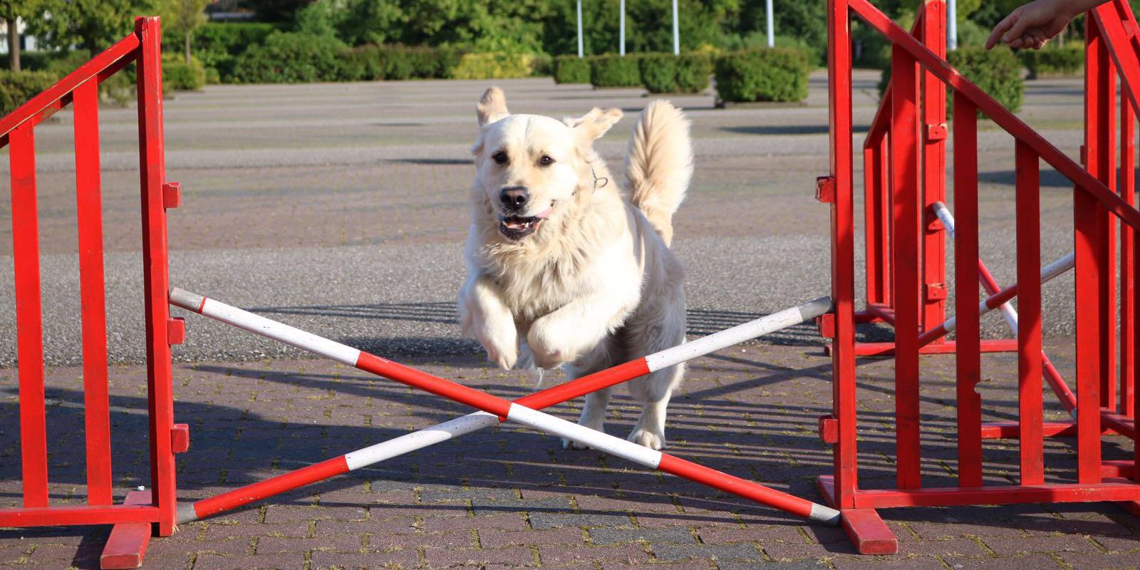 honden funclass