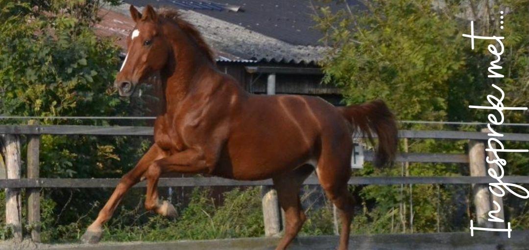 In gesprek met…een Paard.